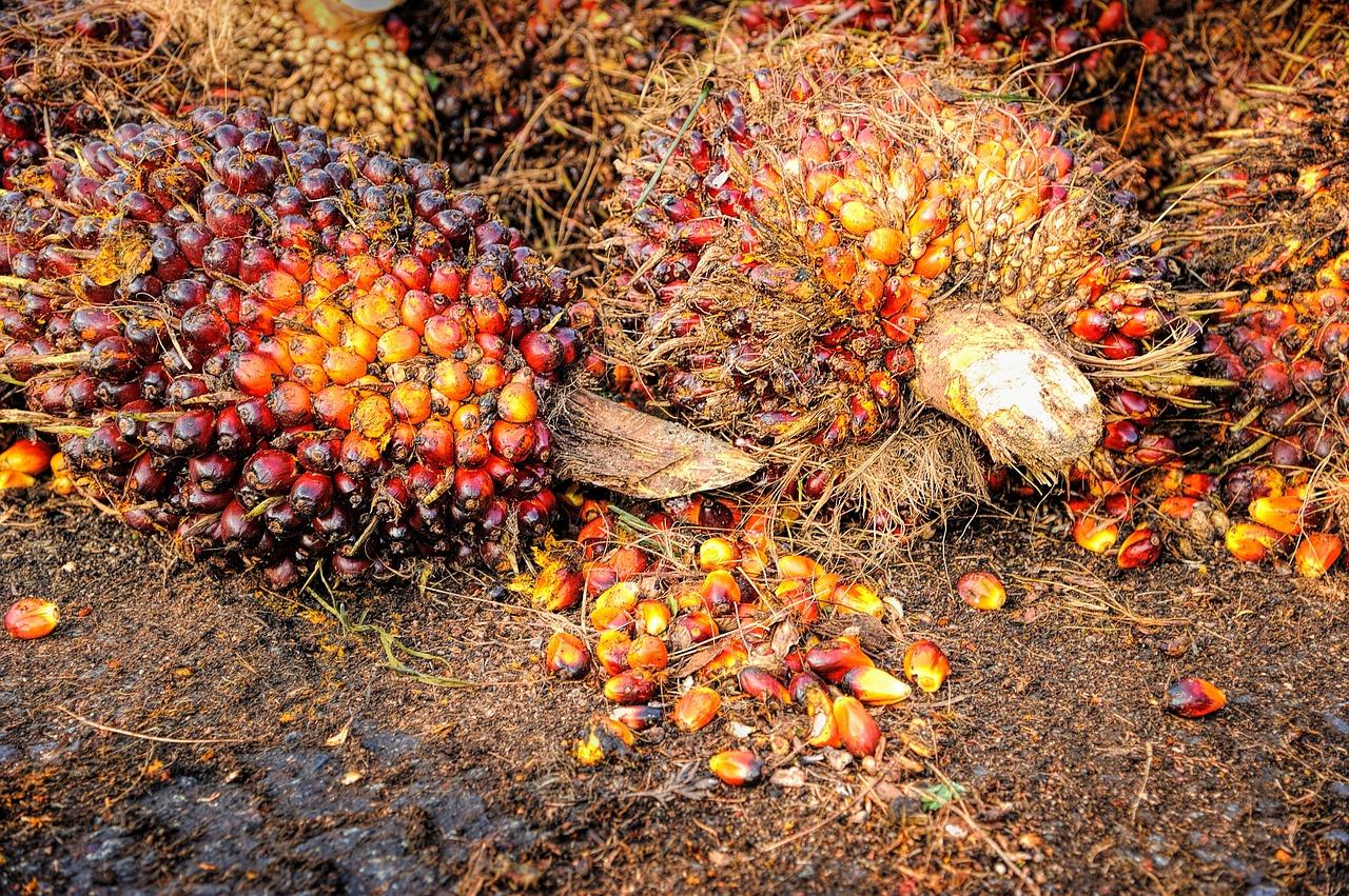 olej palmowy (2)